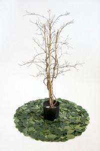 http://www.huberhuber.com/files/gimgs/th-163_163_ficus.jpg