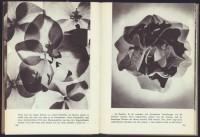 http://www.huberhuber.com/files/gimgs/th-201_201_pflanzenwunder-seiten2-hp.jpg