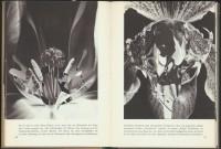 http://www.huberhuber.com/files/gimgs/th-201_201_pflanzenwunder-seiten3-hp.jpg
