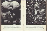 http://www.huberhuber.com/files/gimgs/th-201_201_pflanzenwunder-seiten4-hp.jpg