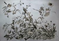 http://www.huberhuber.com/files/gimgs/th-201_201_tote-blumevanitas-das-wunderbuch-der-pflanzenwelthp.jpg