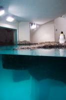 http://www.huberhuber.com/files/gimgs/th-208_208_pinguin-huberhuber-hp.jpg