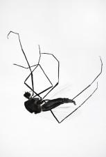http://www.huberhuber.com/files/gimgs/th-29_29_lebensraum-atelier-muecke-iii.jpg