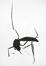 http://www.huberhuber.com/files/gimgs/th-29_29_lebensraum-atelierinsekt-iii.jpg