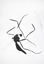 http://www.huberhuber.com/files/gimgs/th-29_29_lebensraum-atelierkleine-muecke-fragmente-iii.jpg