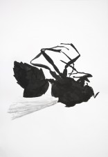 http://www.huberhuber.com/files/gimgs/th-29_29_lebensraum-atelierwespe-ii.jpg