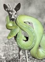 http://www.huberhuber.com/files/gimgs/th-43_43_symbiose50.jpg