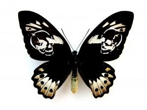 http://www.huberhuber.com/files/gimgs/th-62_62_leichter-als-21-gramm-ornithoptera-aesacus.jpg