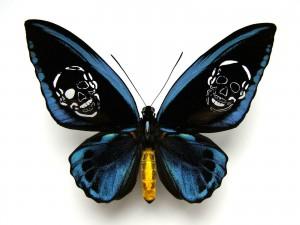 http://www.huberhuber.com/files/gimgs/th-62_62_leichter-als-21-gramm-ornithoptera-priamus-urvillianus.jpg